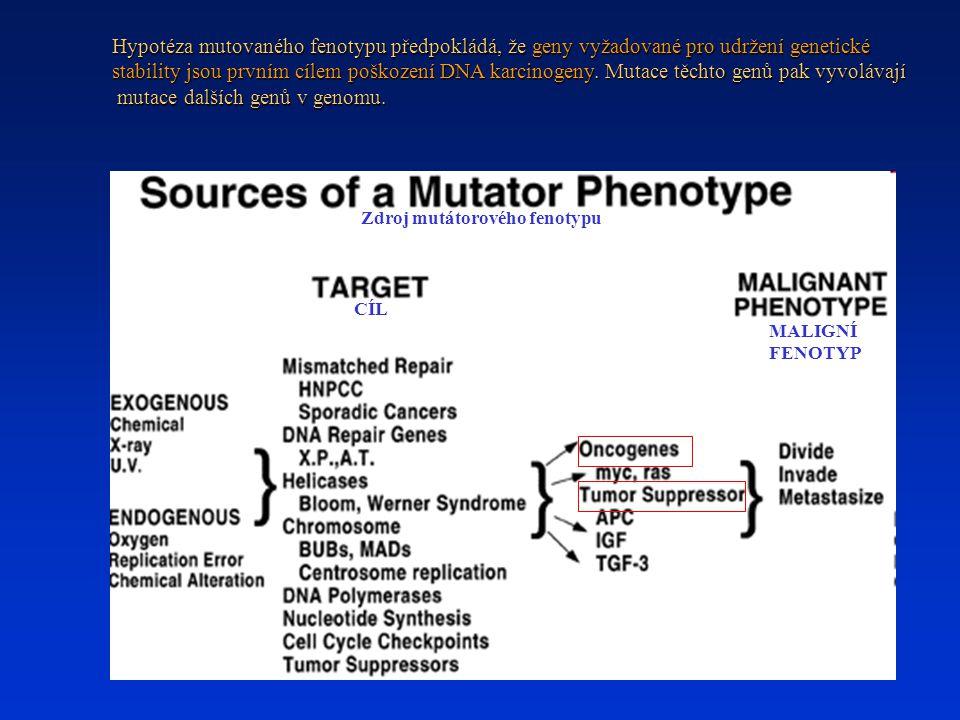 mutace dalších genů v genomu.