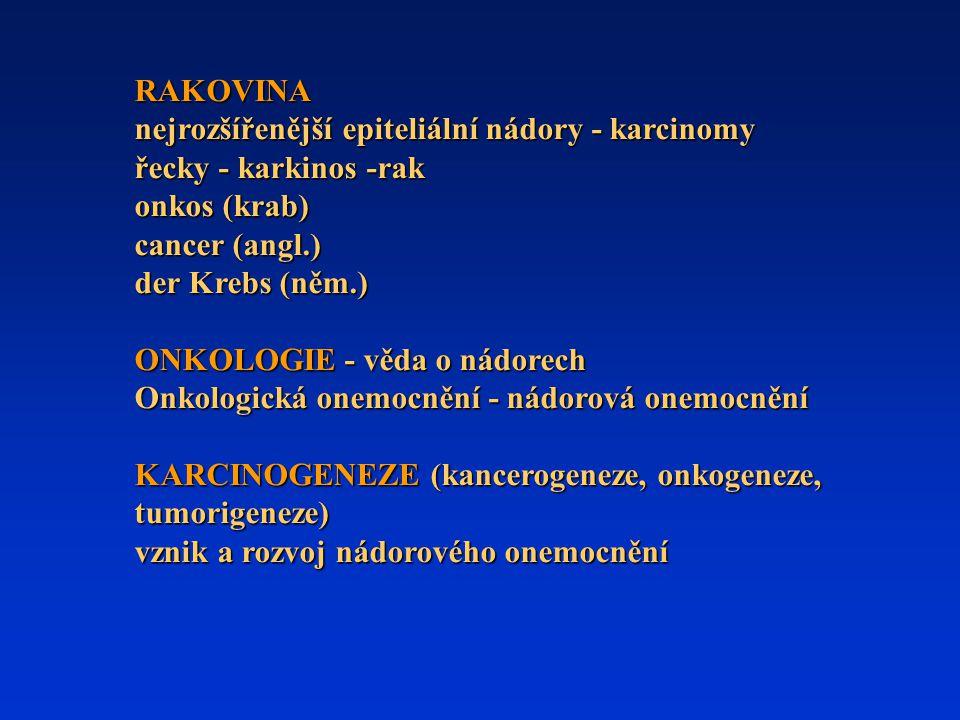 RAKOVINA nejrozšířenější epiteliální nádory - karcinomy. řecky - karkinos -rak. onkos (krab) cancer (angl.)