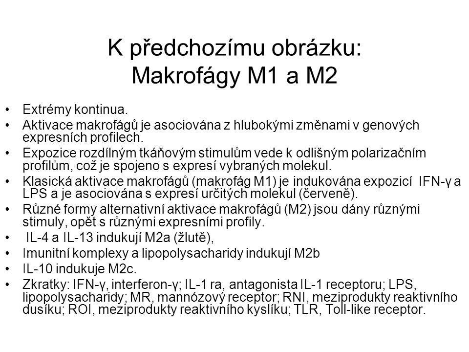 K předchozímu obrázku: Makrofágy M1 a M2