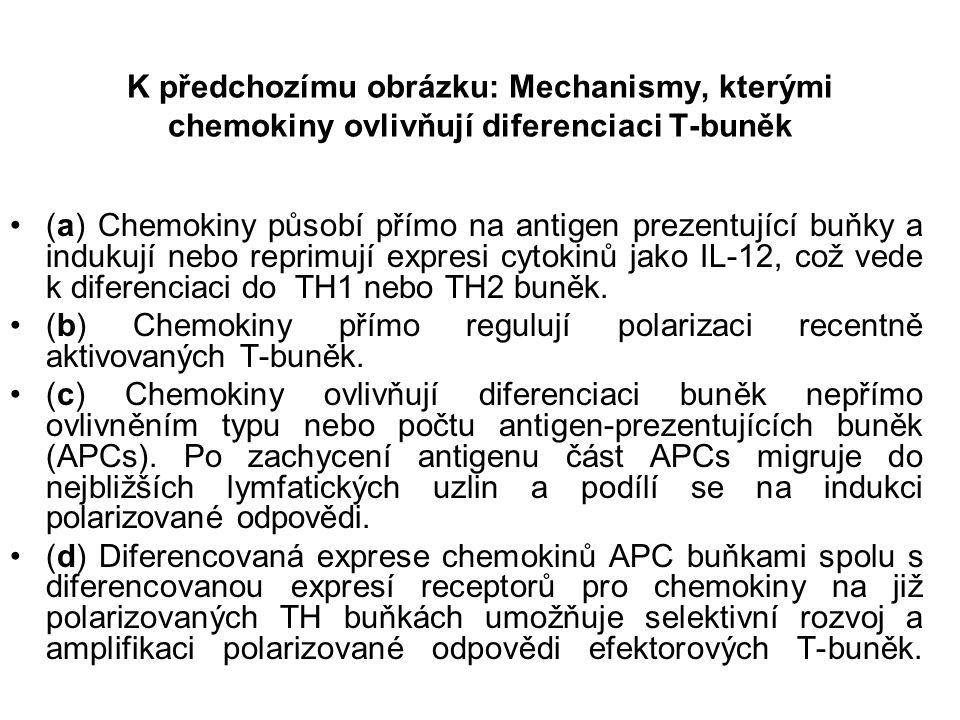 K předchozímu obrázku: Mechanismy, kterými chemokiny ovlivňují diferenciaci T-buněk