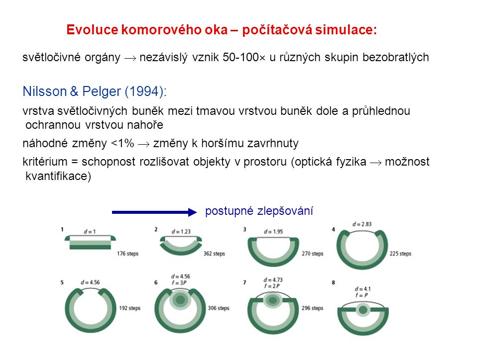 Evoluce komorového oka – počítačová simulace: