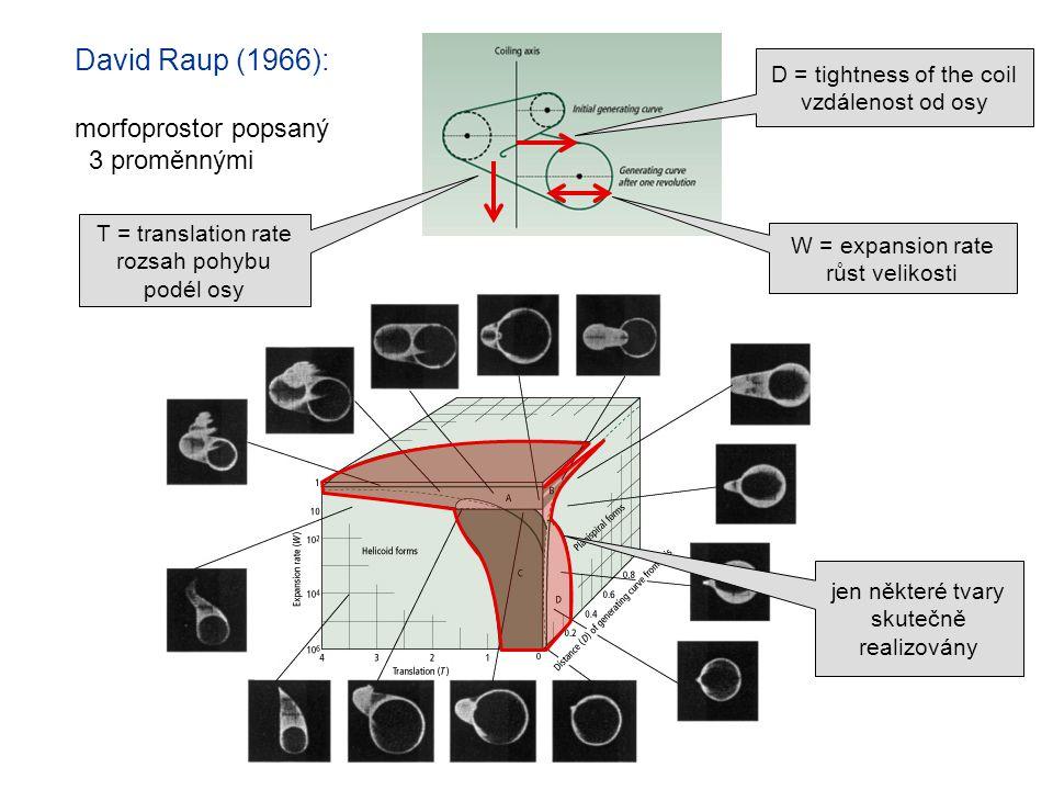 David Raup (1966): morfoprostor popsaný 3 proměnnými