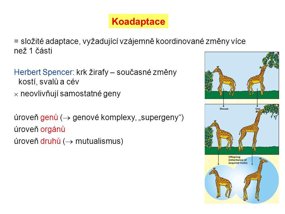 Koadaptace = složité adaptace, vyžadující vzájemně koordinované změny více než 1 části.