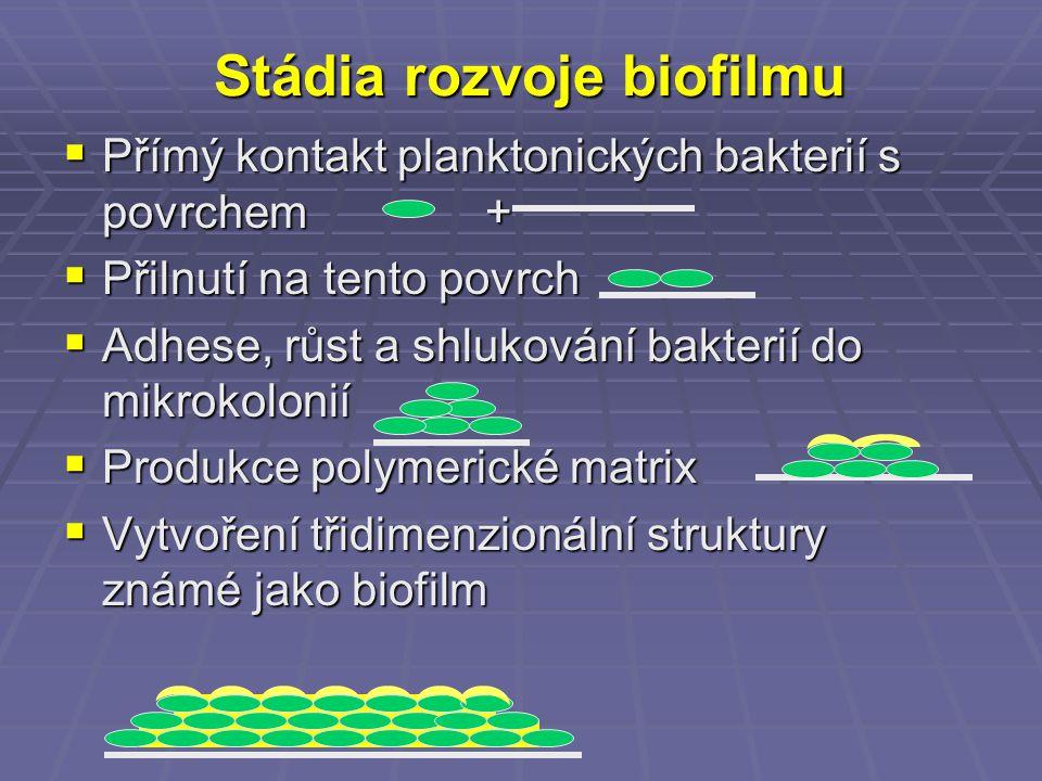 Stádia rozvoje biofilmu
