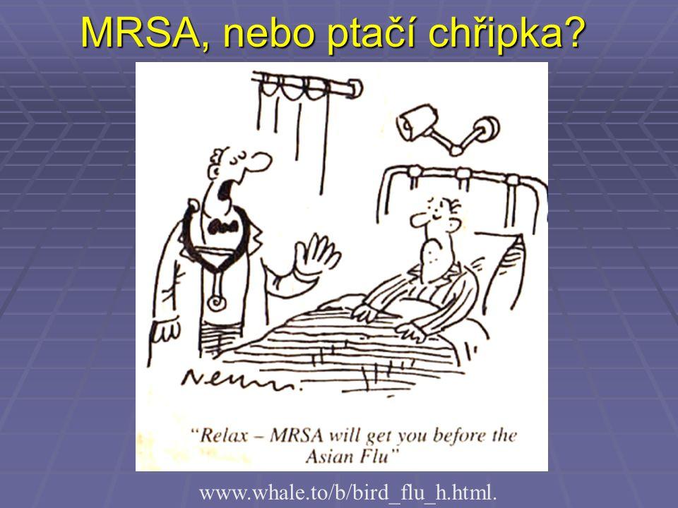 MRSA, nebo ptačí chřipka
