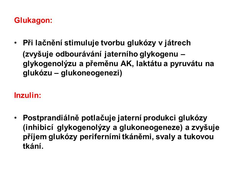 Glukagon: Při lačnění stimuluje tvorbu glukózy v játrech.