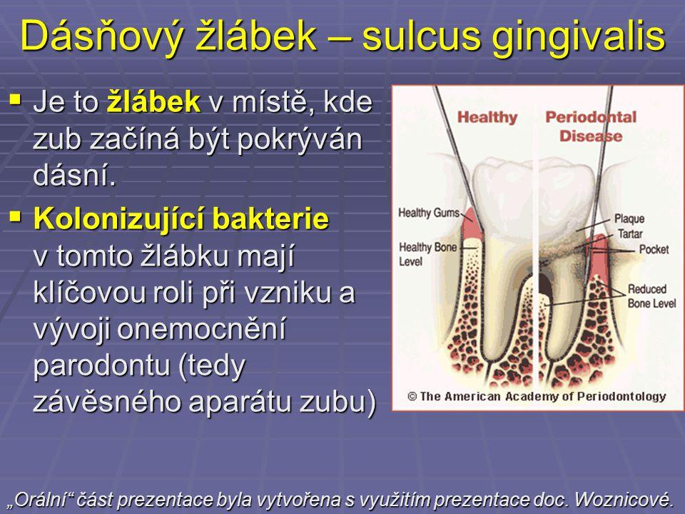 Dásňový žlábek – sulcus gingivalis