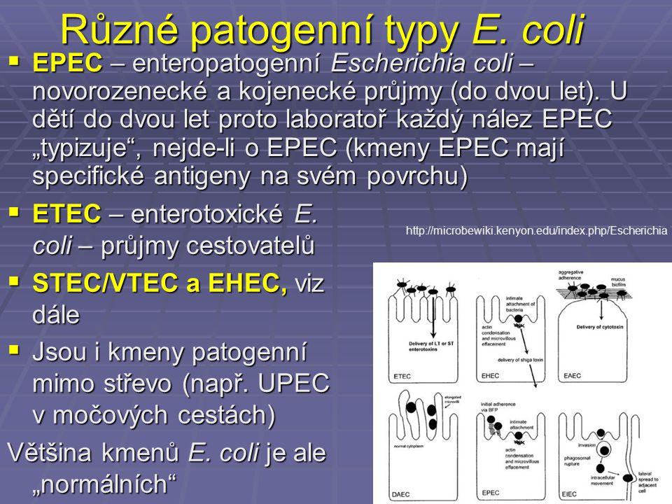 Různé patogenní typy E. coli