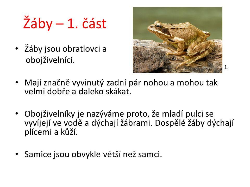 Žáby – 1. část Žáby jsou obratlovci a obojživelníci.