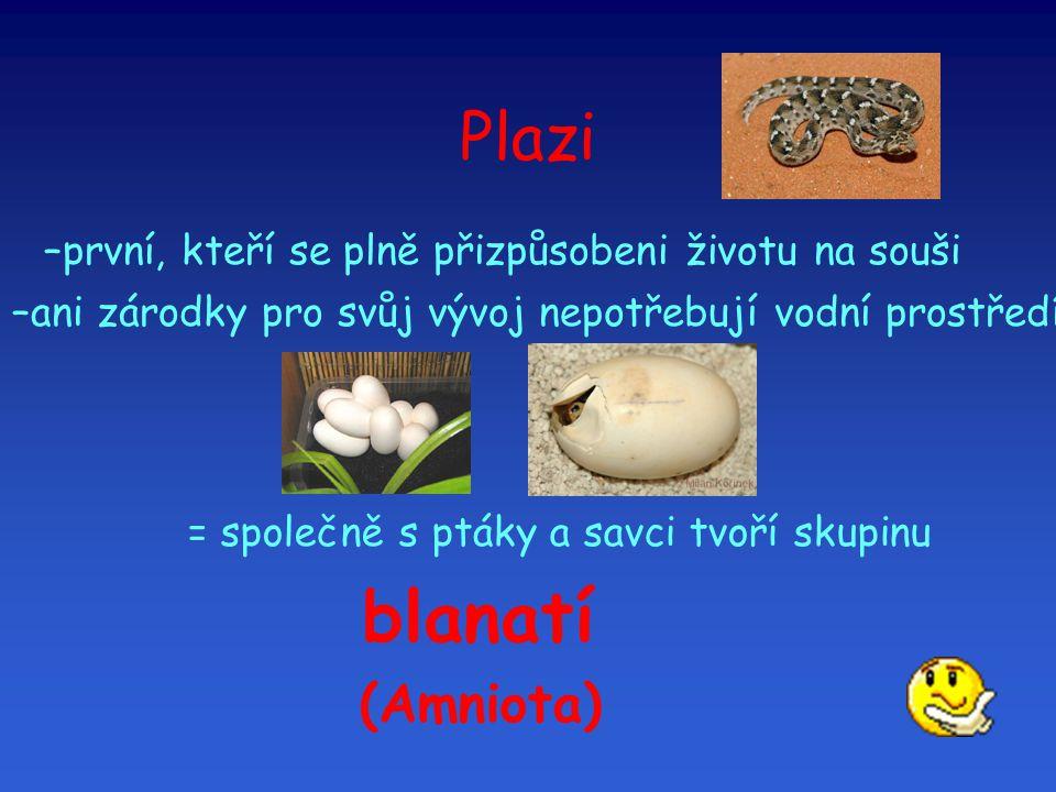 Plazi (Amniota) první, kteří se plně přizpůsobeni životu na souši
