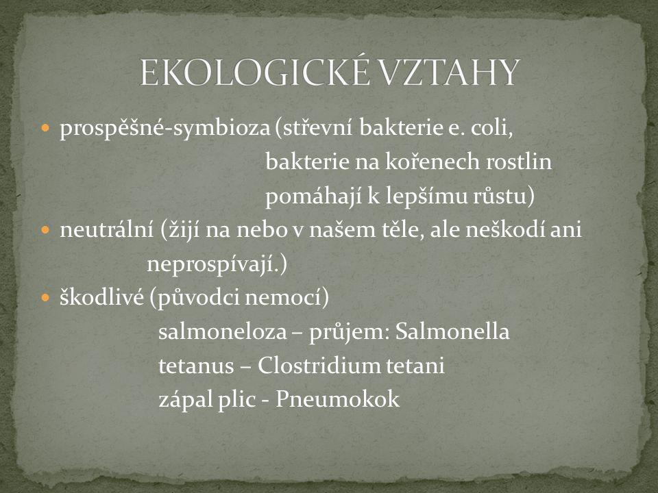 EKOLOGICKÉ VZTAHY prospěšné-symbioza (střevní bakterie e. coli,