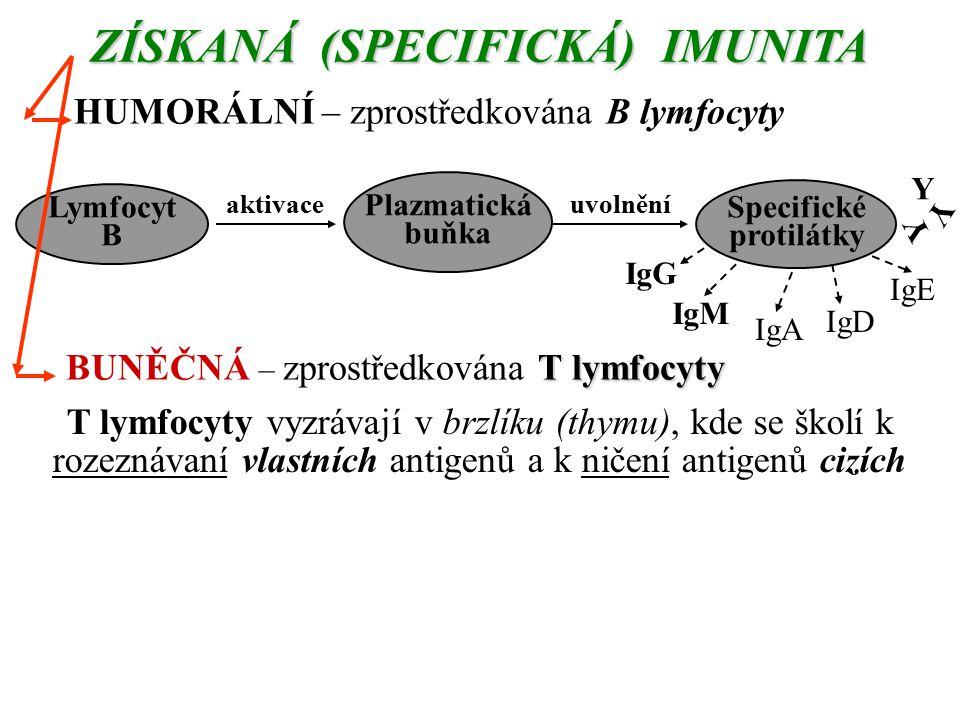 ZÍSKANÁ (SPECIFICKÁ) IMUNITA