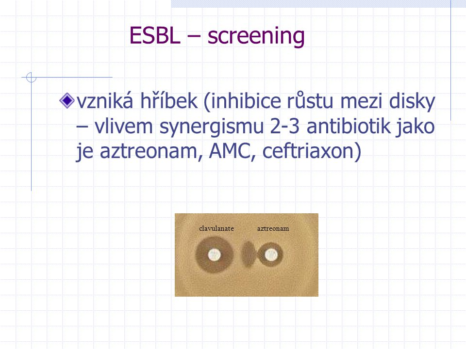 ESBL – screening vzniká hříbek (inhibice růstu mezi disky – vlivem synergismu 2-3 antibiotik jako je aztreonam, AMC, ceftriaxon)