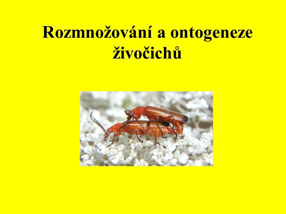Rozmnožování a ontogeneze živočichů
