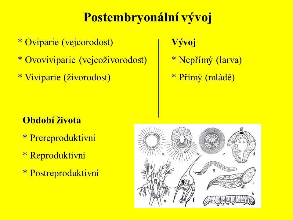 Postembryonální vývoj