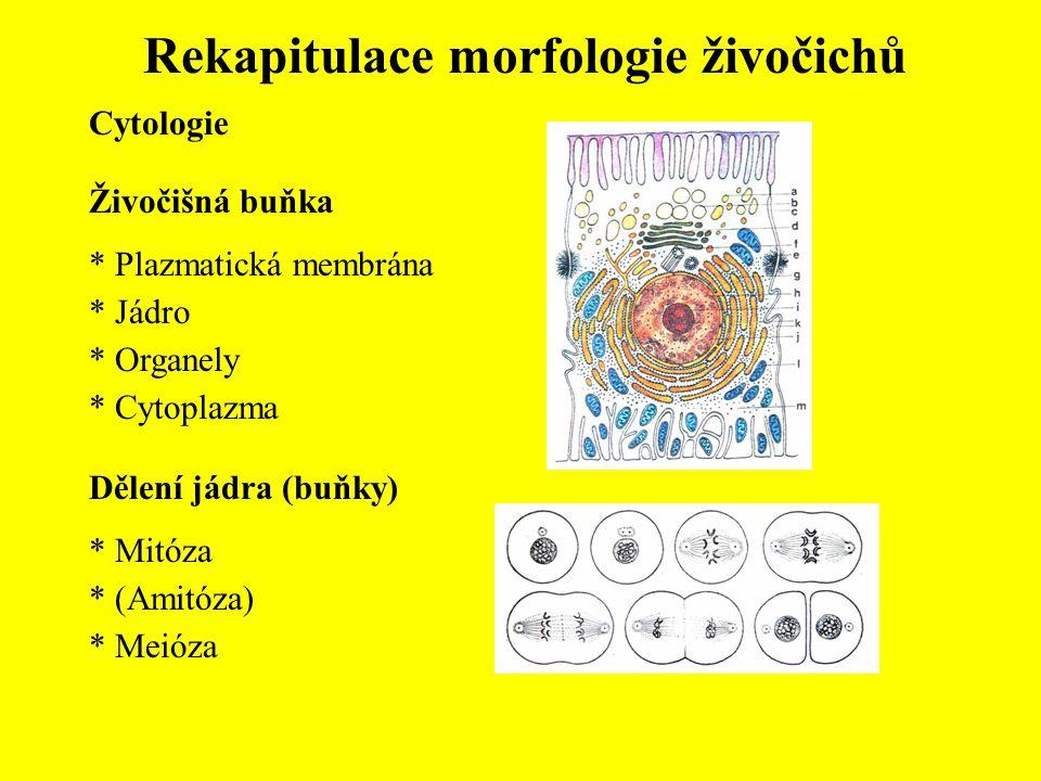Rekapitulace morfologie živočichů