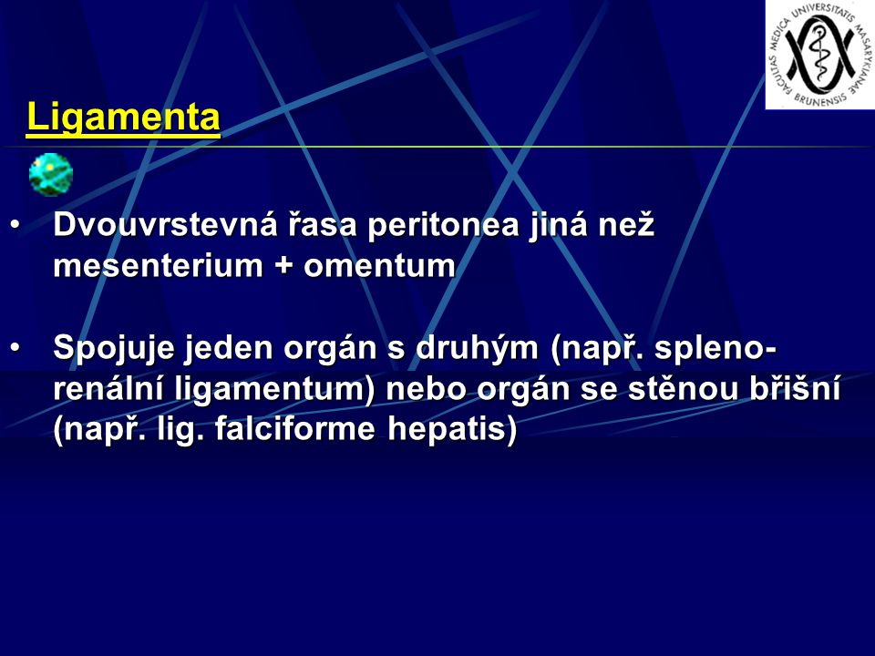 Ligamenta Dvouvrstevná řasa peritonea jiná než mesenterium + omentum