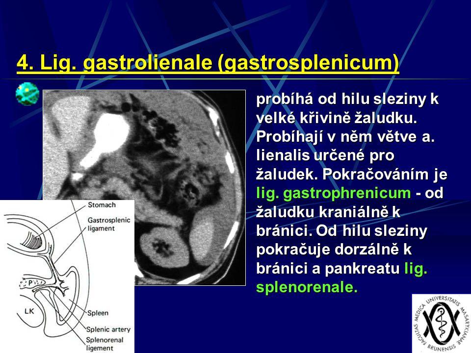 4. Lig. gastrolienale (gastrosplenicum)
