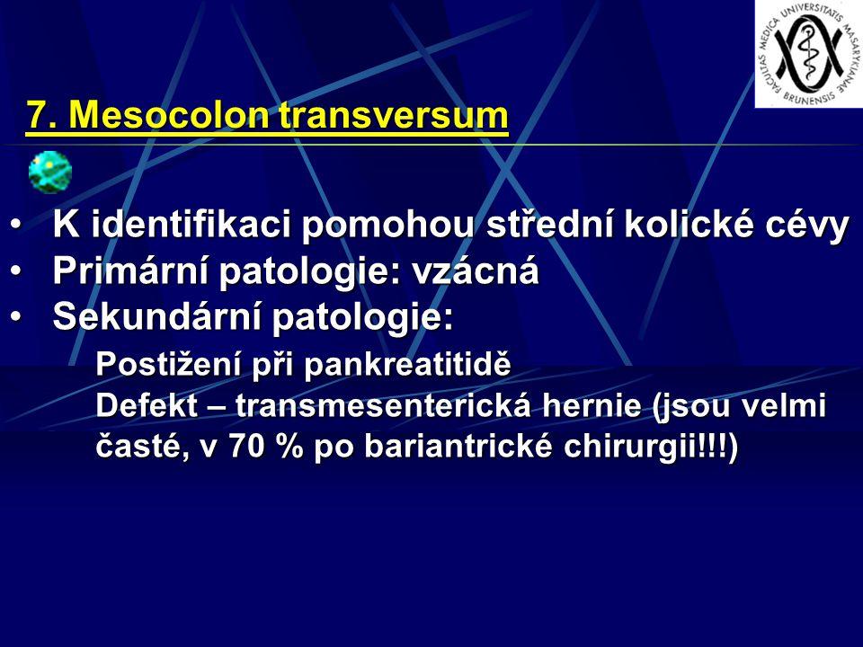 7. Mesocolon transversum