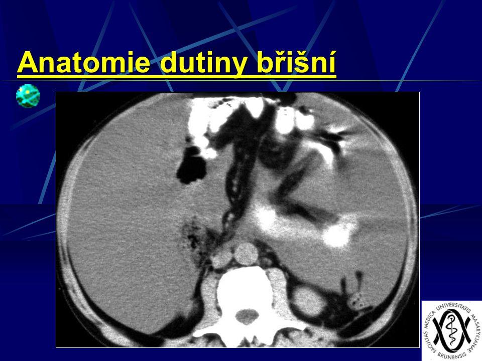 Anatomie dutiny břišní