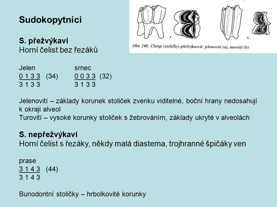 Sudokopytníci S. přežvýkaví Horní čelist bez řezáků S. nepřežvýkaví