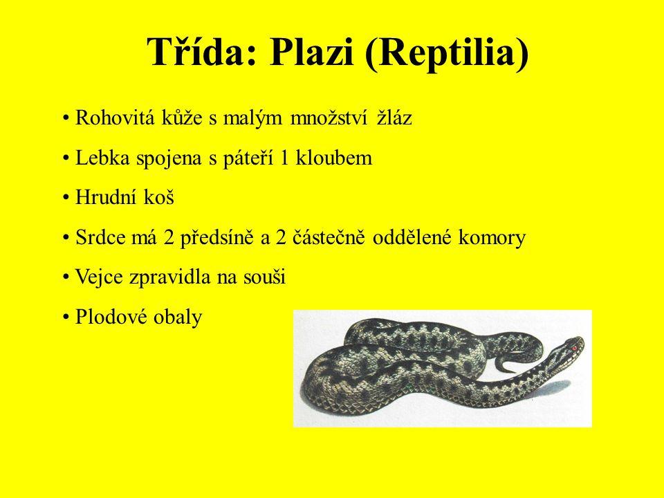 Třída: Plazi (Reptilia)