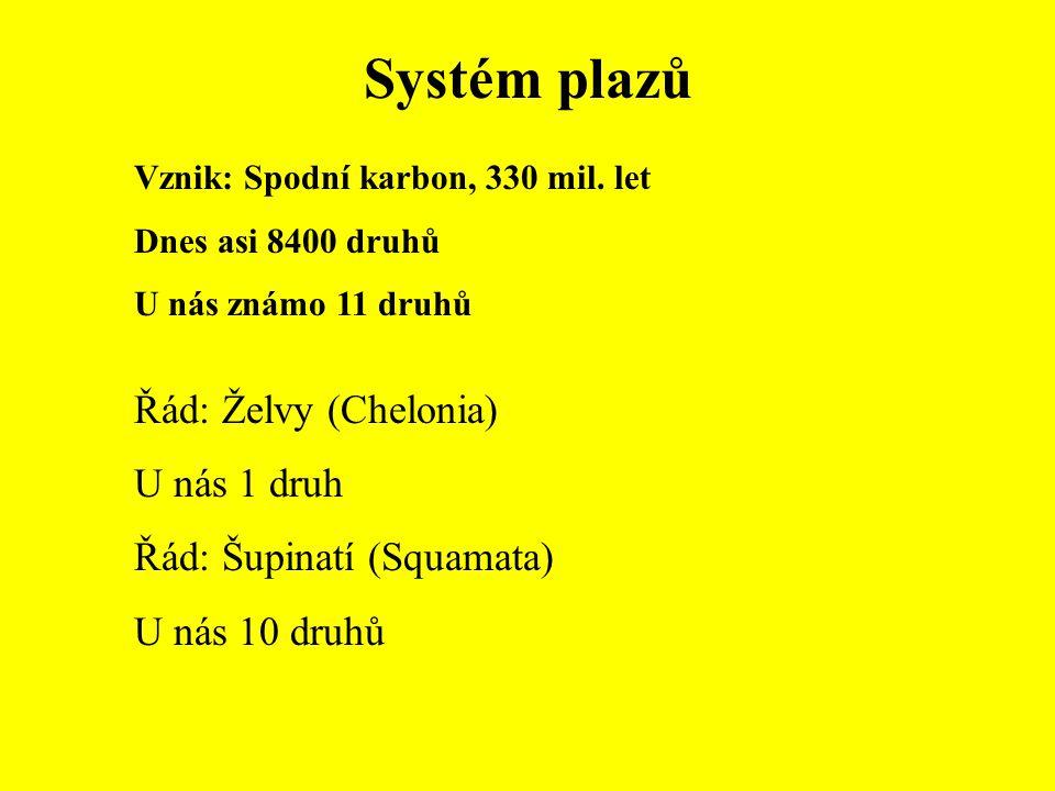Systém plazů Řád: Želvy (Chelonia) U nás 1 druh
