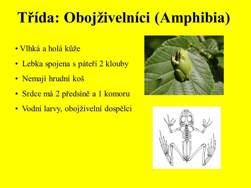 Třída: Obojživelníci (Amphibia)