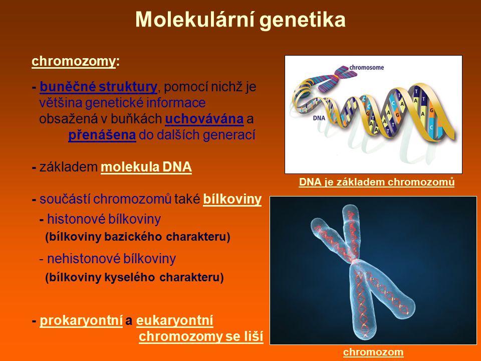 DNA je základem chromozomů