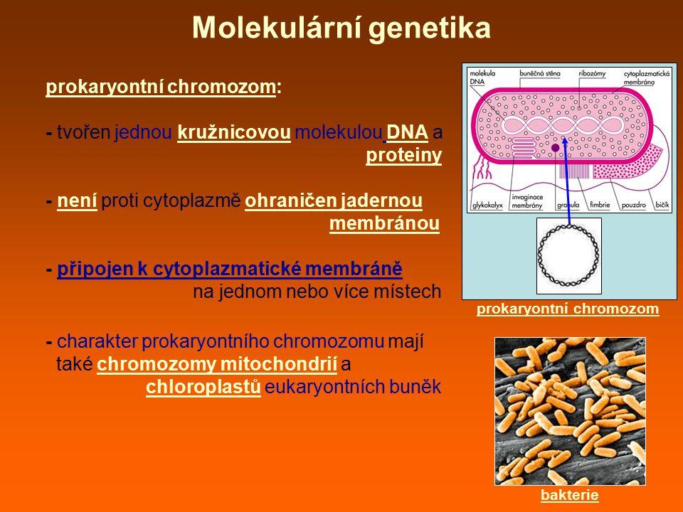 prokaryontní chromozom