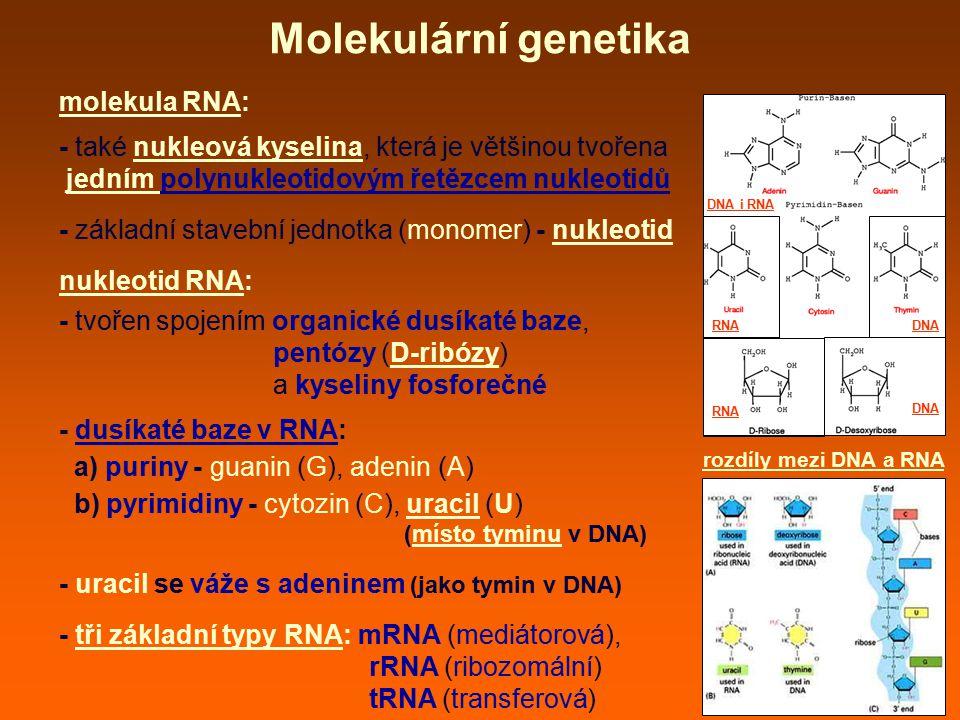 Molekulární genetika molekula RNA: