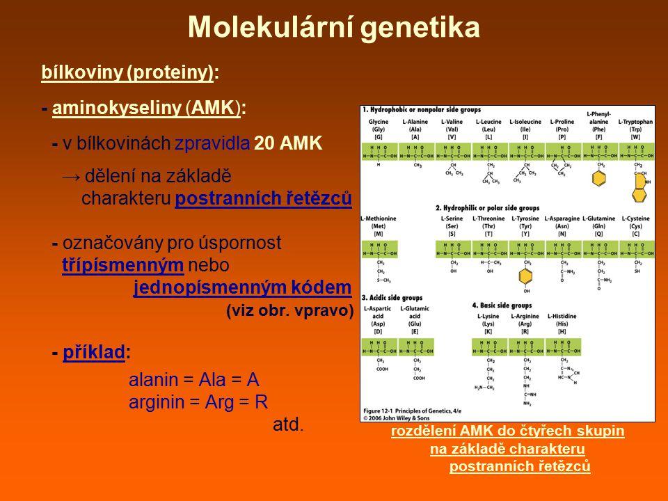 Molekulární genetika bílkoviny (proteiny): - aminokyseliny (AMK):