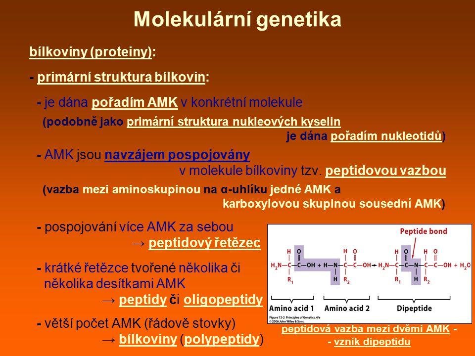 peptidová vazba mezi dvěmi AMK -