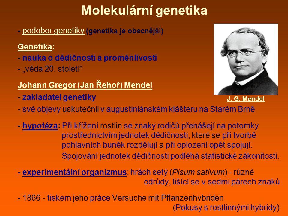Molekulární genetika - podobor genetiky (genetika je obecnější)