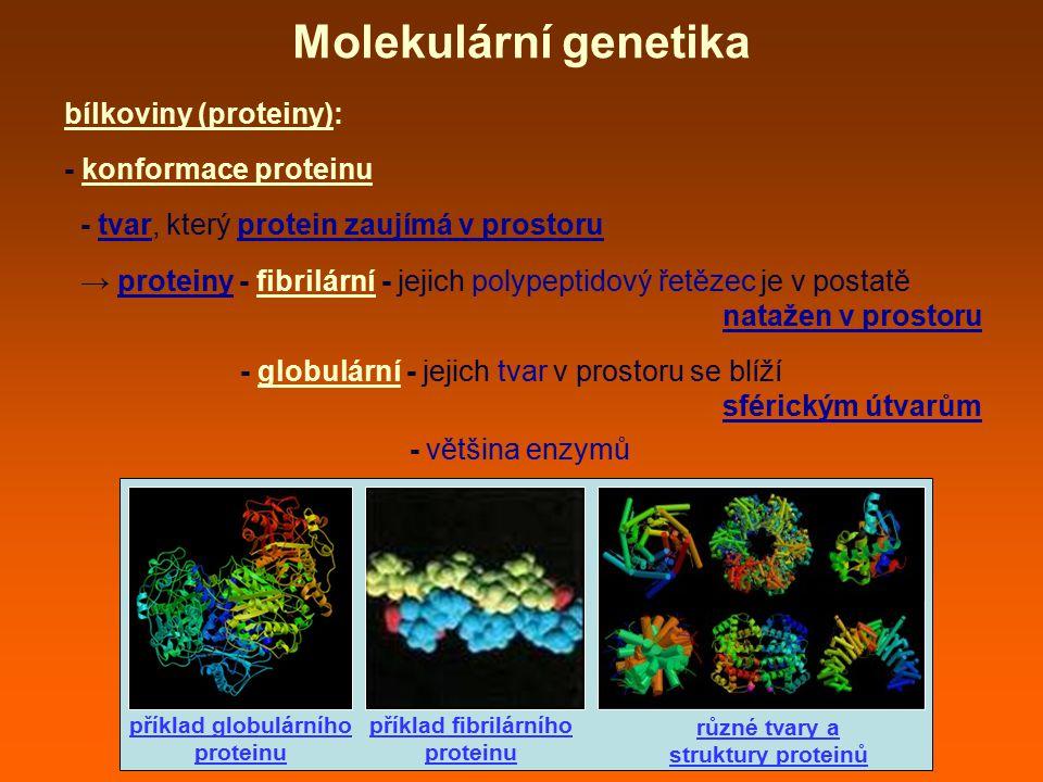 Molekulární genetika bílkoviny (proteiny): - konformace proteinu