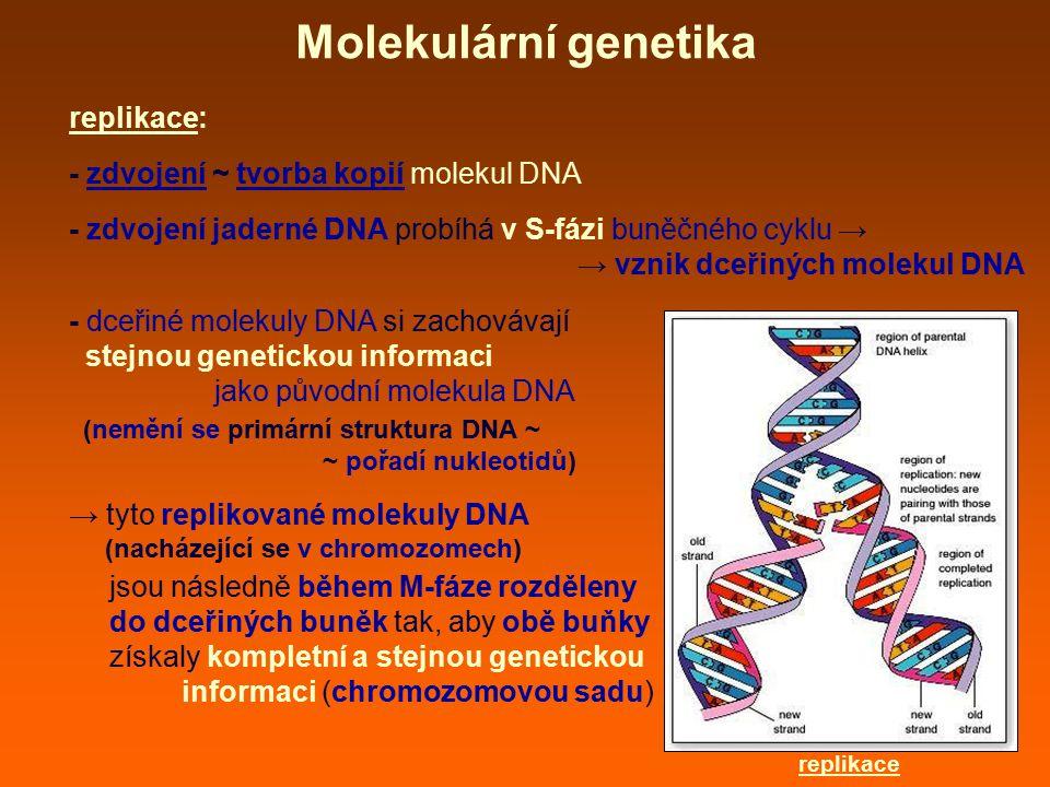 Molekulární genetika replikace: - zdvojení ~ tvorba kopií molekul DNA
