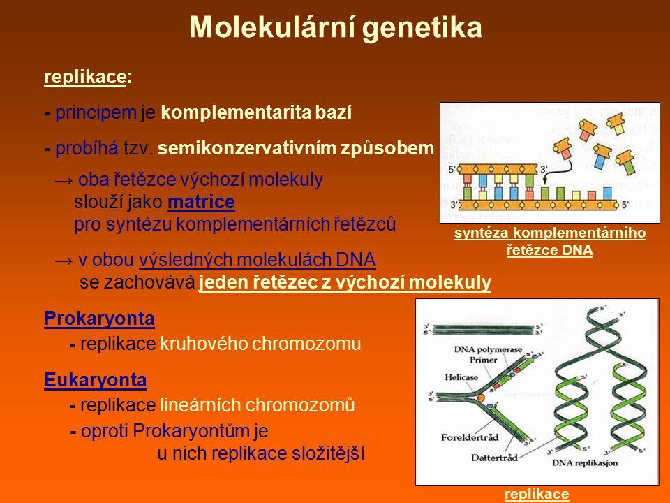 syntéza komplementárního řetězce DNA