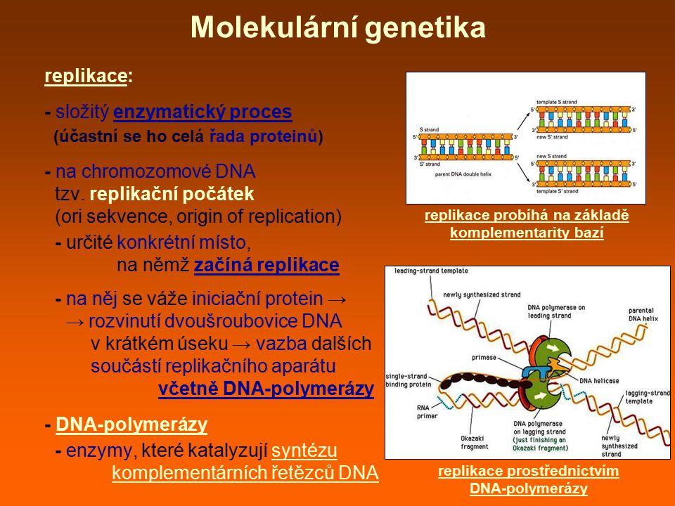 Molekulární genetika replikace: - složitý enzymatický proces
