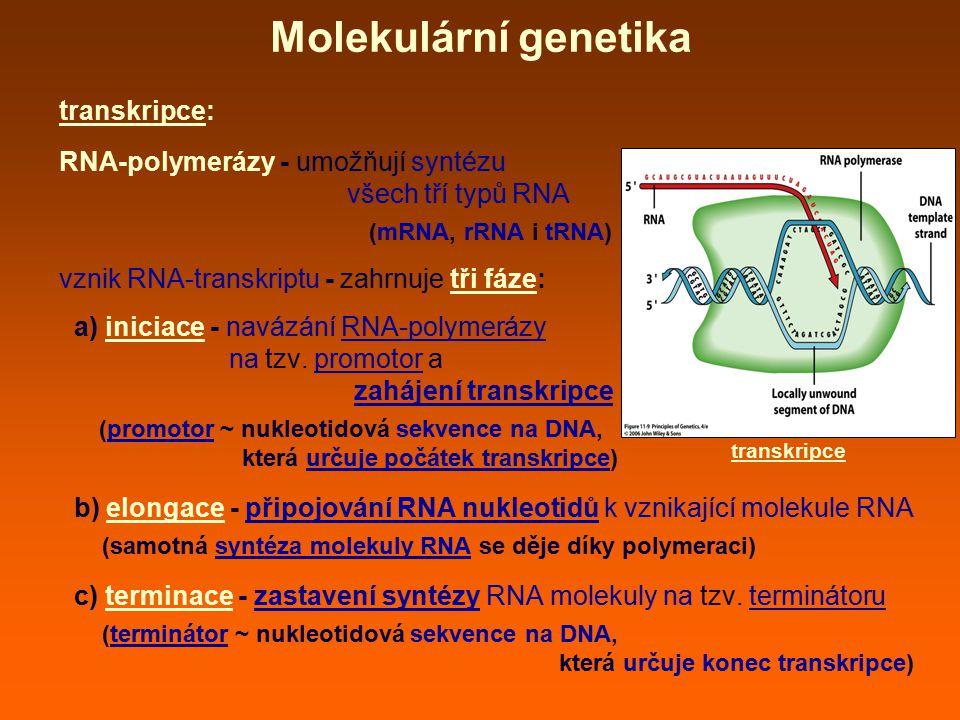 Molekulární genetika transkripce: RNA-polymerázy - umožňují syntézu