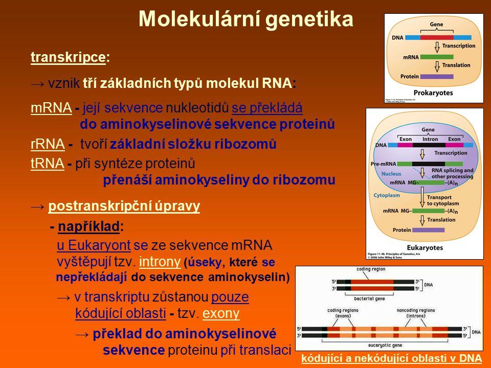 kódující a nekódující oblasti v DNA