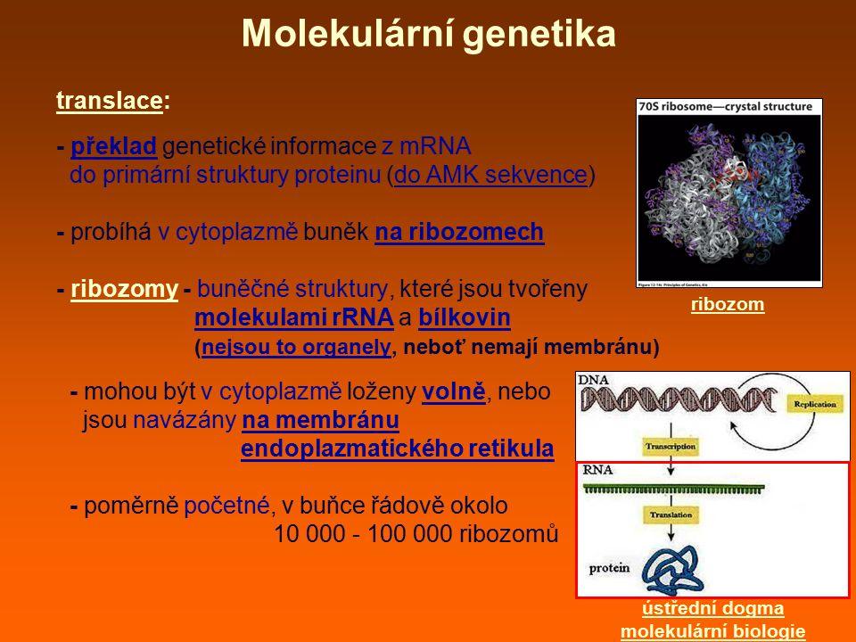 Molekulární genetika translace: - překlad genetické informace z mRNA