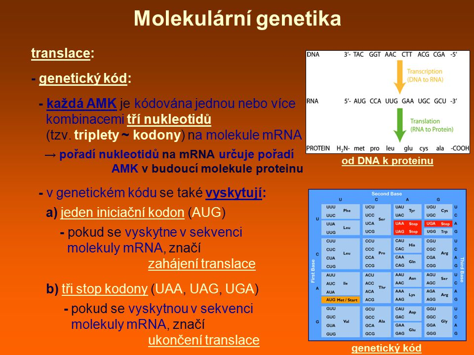 Molekulární genetika translace: - genetický kód: