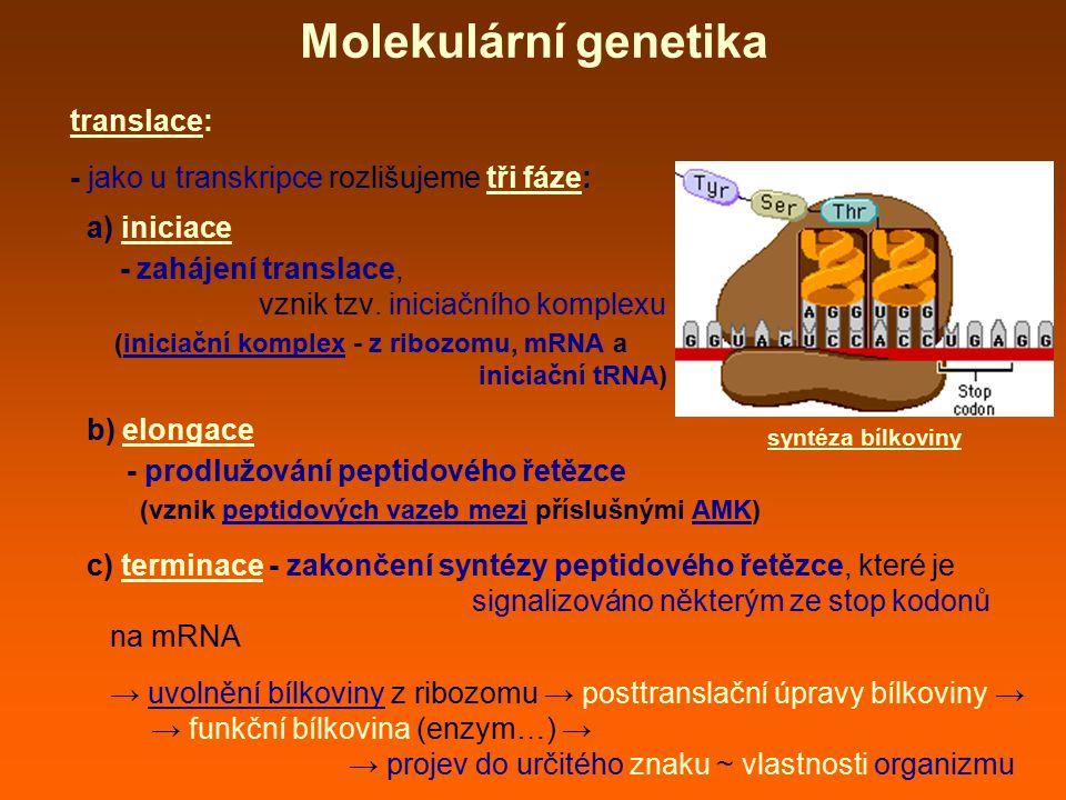 Molekulární genetika translace: