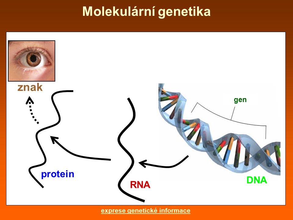 exprese genetické informace