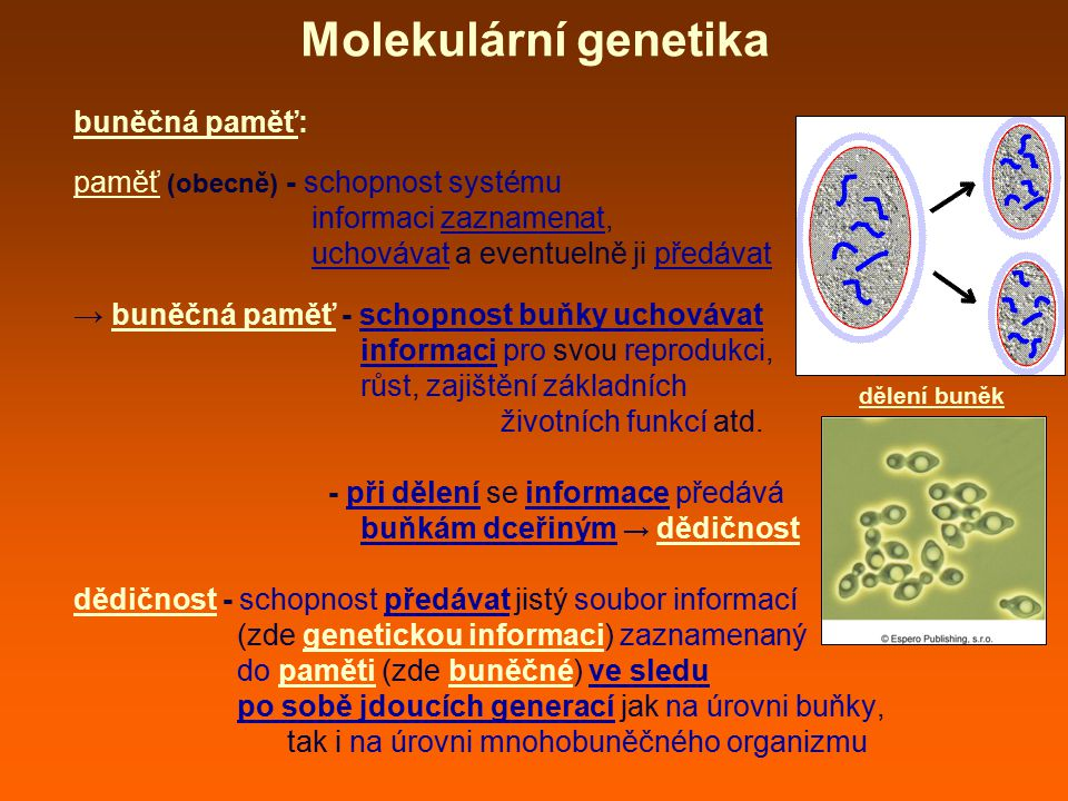 Molekulární genetika buněčná paměť: paměť (obecně) - schopnost systému