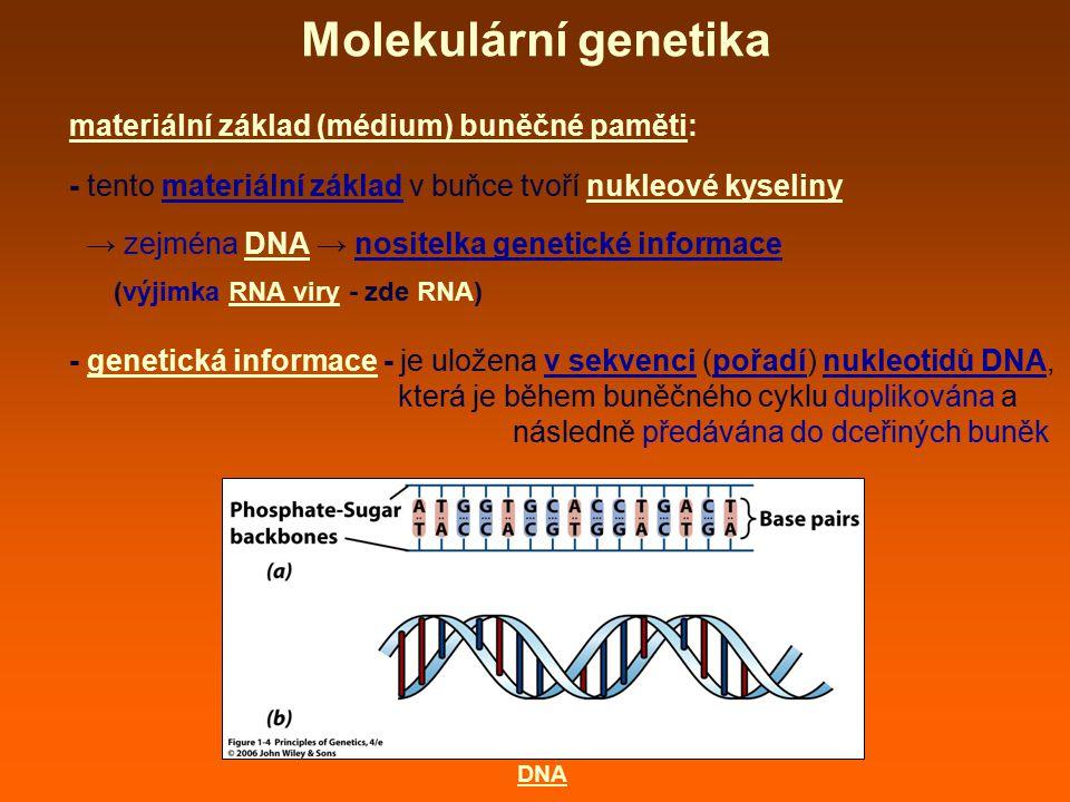 Molekulární genetika materiální základ (médium) buněčné paměti: