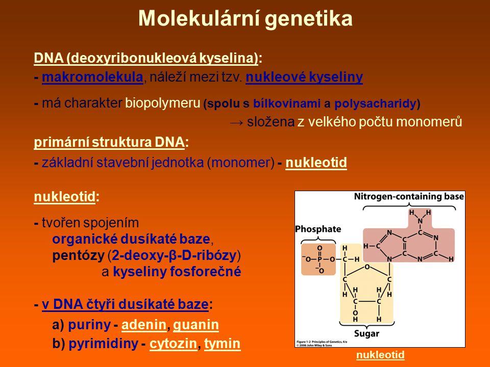 Molekulární genetika DNA (deoxyribonukleová kyselina):