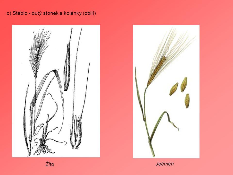 c) Stéblo - dutý stonek s kolénky (obilí)