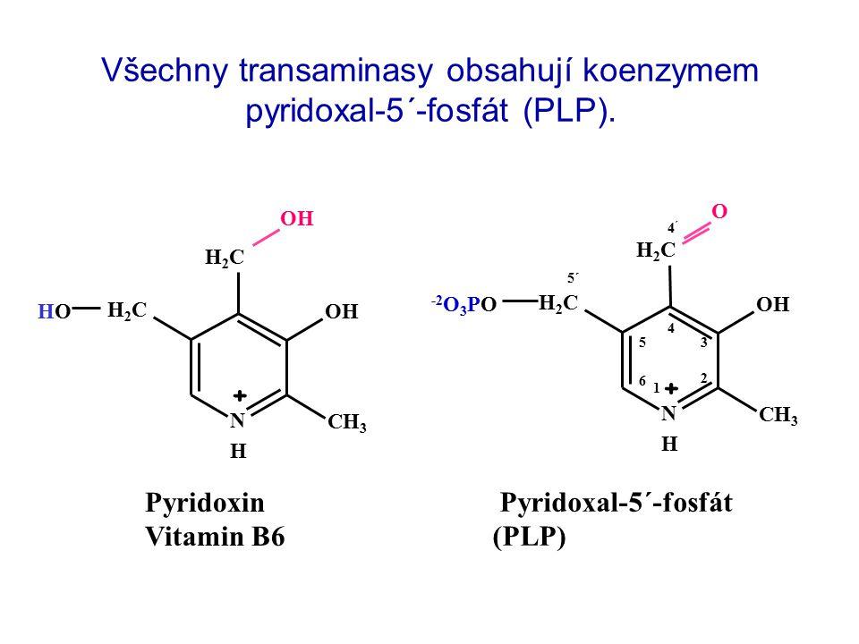Všechny transaminasy obsahují koenzymem pyridoxal-5´-fosfát (PLP).
