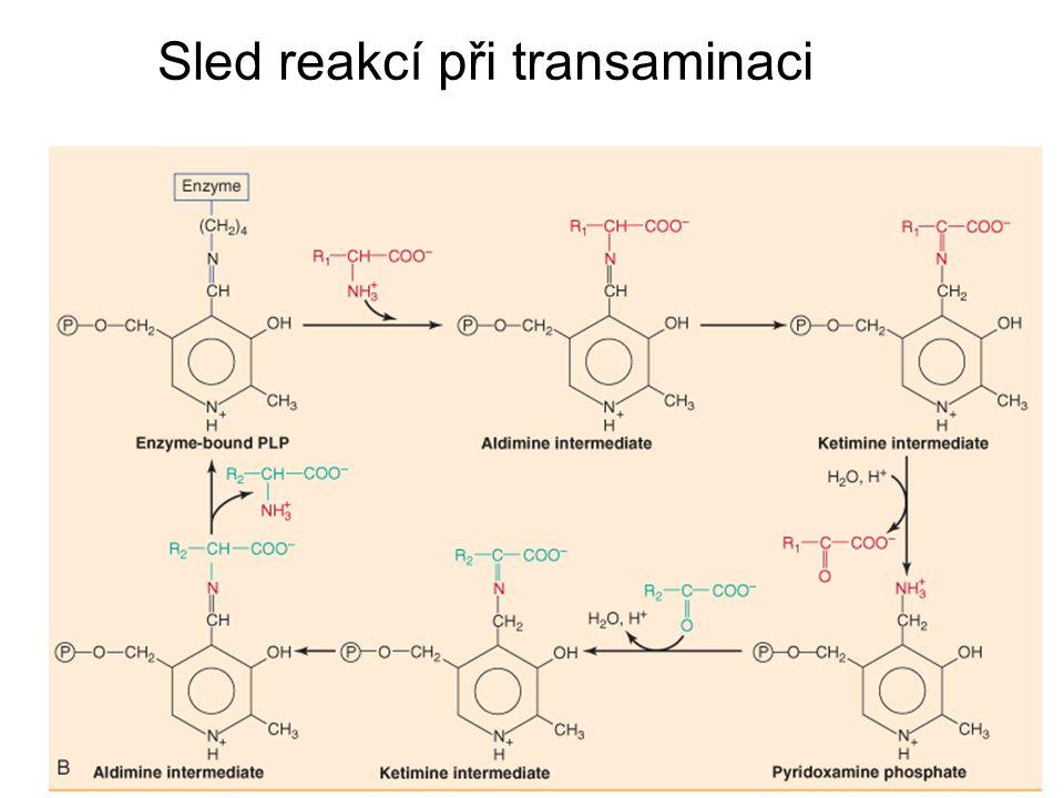 Sled reakcí při transaminaci